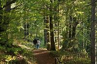 Near Bischofsheim, Rhoen, Franconia, Bavaria, Germany