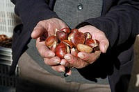 Old hands with chestnuts, Valle del Genal, Andalucia, España
