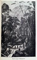 France, Madagascar: ´Forêt vierge à Madagascar´, from the book ´Madagascar, la reine des Iles Africaines´, 1883