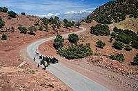 Boy herding sheep down a moutain road, High Atlas Mountains, Morocco