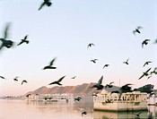 Flock of bird flying over lake with Indian architecture in background