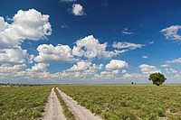 Africa, Botswana, View of central kalahari game reserve with track