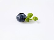 A Single Blueberry on a White Background