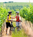 bikers in vineyard, Czech Republic