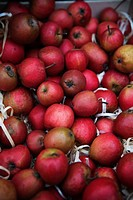 Sweden, Stockholm, red apples