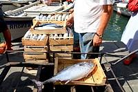 pescato appena scaricato dalla barca, camogli, liguria, italia