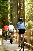 Three mountain bikers riding across a wooden bridge in a forest.