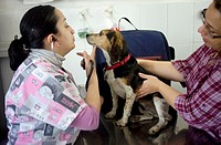 A veterinarian attends a dog at a Pet Hospital in Condesa, Mexico City, Mexico, February 18, 2011