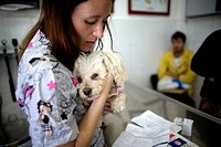 A veterinarian holds a Poodle dog as she speaks with its owners at a Pet Hospital in Condesa, Mexico City, Mexico, February 2, 2011