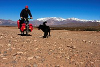 A mongrel runing by a man who is cycling on an unpaved road in the Andes in Argentina in the vicinity of Uspallata village
