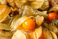 Physalis, full frame