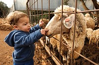 Toddler with a sheep at a petting corner in a children´s zoo