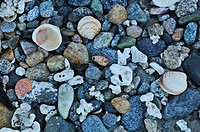 Shells, Isla Cerralvo, Ventana Bay, Sea of Cortez, Baja California Sur, Baja, California, Sur, Mexico, Middle America, stones