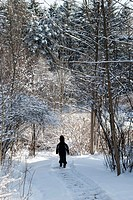A small boy walking a Winter path through the woods