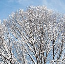 USA, New York, New York City, tree branches covered with snow against blue sky