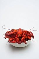 Cooked crayfish, Paranephrops planifron