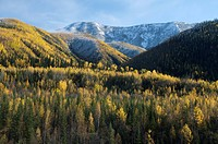 Northern Rocky Mountains with snow and autumn aspens, between Muncho Lake and Toad River, along Alaska Highway in British Columbia, Canada.