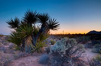 Mojave National Preserve, California, United States of America, North America