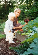 Mother picking vegetables in garden with son