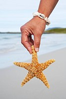 Persons hand holding starfish on beach