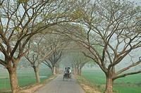 A winter morning Kaliganj, Gazipur, Bangladesh March 3, 2008
