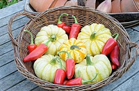 Rustic basket on garden table with collection of Autumn squashes and chillies, Norfolk, UK, September