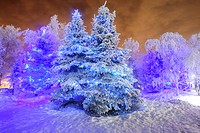 View of frosted Spruce tree covered in blue holiday lights, Anchorage, Southcentral Alaska, Winter, HDR image
