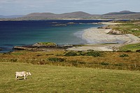 lettergesh beach on the renvyle peninsula, county galway, ireland