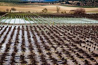 Photograph of the agriculture fields of Andalusia Spain