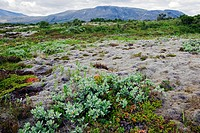 THINGVELLIR NATIONAL PARK, NEAR HVERAGERDI, AN IMPORTANT PLACE IN ICELAND'S HISTORY HOUSING ONE OF THE OLDEST PARLIAMENTS ALTHING, FOUNDED 930 IN THE ...