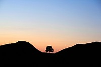 England, Northumberland, Bardon Mill. Sycamore Gap at Hadrian's Wall in silhouette