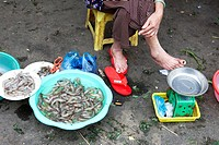Shrimp Seller, Market, Hoi An, Vietnam
