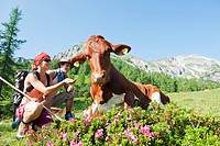 Austria, Salzburg Country, Altenmarkt_Zauchensee, Young couple hiking in mountains of Niedere Tauern, woman feeding cow