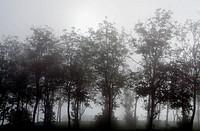 Trees, La Morra, Piedmont, Italy
