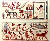 EGYPT: AGRICULTURE.Egyptian tomb painting of agricultural scenes from the tomb of Nakht at Thebes. 18th Dynasty.