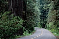 Road passing through Redwood National Park, California, USA