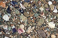 Pile of pebbles and seashells
