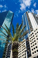 Low angle view of skyscrapers, Magnolia Avenue, Orlando, Florida, USA