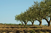 Agriculture in Monegros  Aragon, Spain