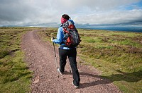 Single female hiker walking north on Offa's Dyke Path, near Hay Bluff, Black mountains, Wales