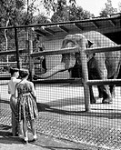 Rear view of a boy and girl watching an elephant in a zoo