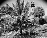 Palm tree in front of a lighthouse, Jupiter Inlet Lighthouse, Jupiter, Florida, USA