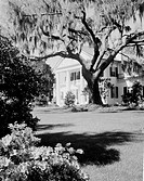 USA, North Carolina, Wilmington, Orton Plantation Home with large live Oak and Spanish moss