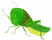 Illustration of a grasshopper