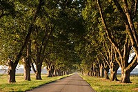 Pecan trees along a road, Arkansas, USA