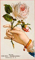 Hand Holding Roses Nostalgia Cards Illustration