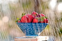 Rain falling down on a bowl full of strawberries
