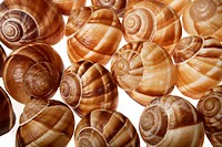 Shells of escargot against white background, close up