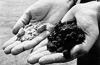 OIL DRILLING, c1944.A geologist holds handfuls of dry sand (left) and black, oil-wet sand after performing tests for potential drilling sites. Photogr...