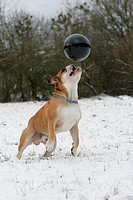Action in the snow